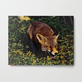 red fox puppy in the green Metal Print
