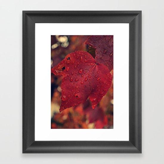 Fall Drops II  Framed Art Print