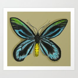 Queen Alexandra's Birdwing Butterfly Art Print
