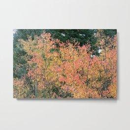 Aspen Tree Metal Print