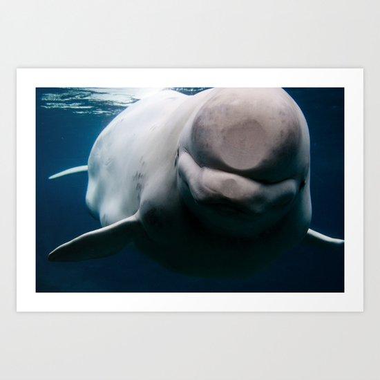 Swim So Wild Art Print