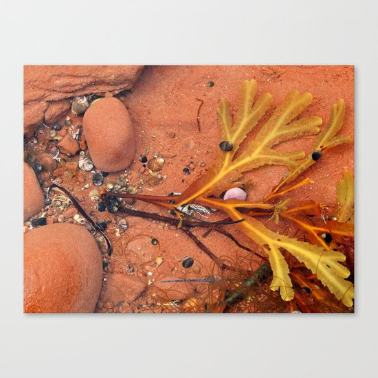 Life on the Tidal Shelf in PEI Canvas Print