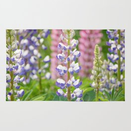 Lovely Lupines Rug