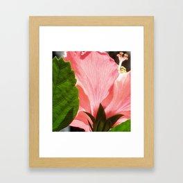 Pink Hibiscus Framed Art Print
