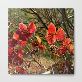 Winter warmth Metal Print