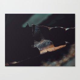 aloe bark Canvas Print