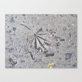 """Sidewalk Fossil"" Canvas Print"
