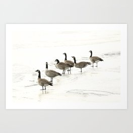 Contemplating Geese Frozen Lake Art Print