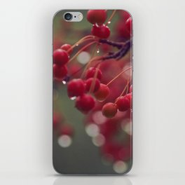 candied iPhone Skin