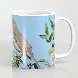 Northern Mockingbird Looks South Coffee Mug