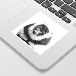 Black and white lemur animal portrait Sticker