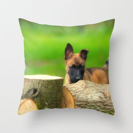 Cute Malinois Dog after the wood Throw Pillow