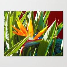 Bird of Paradise III Canvas Print
