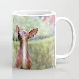 Outdoor portrait of a red miniature pinscher dog sitting on grass Coffee Mug