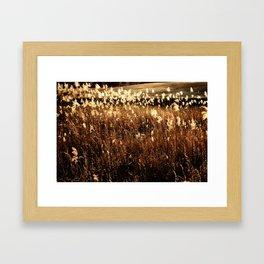 Light on Reeds Framed Art Print