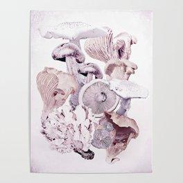 Mushroom Medley Poster