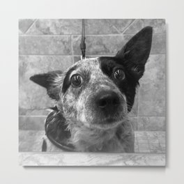 Bathtime Indignity Metal Print