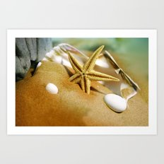 Sea shells II Art Print