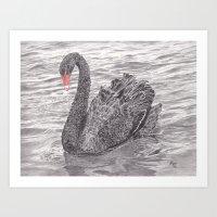 Black Swan Display Art Print