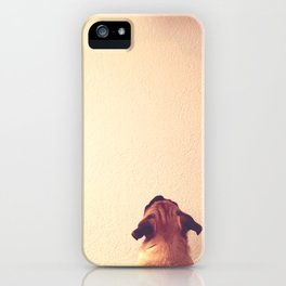 Pug staring up the wall iPhone Case