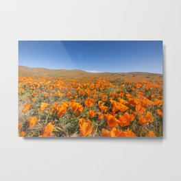 Blooming poppies in Antelope Valley Poppy Reserve Metal Print