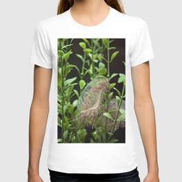 Jellyfish with Stripes T-shirt