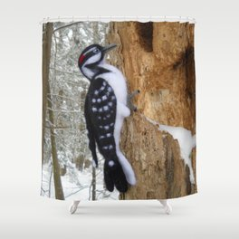 Hairy Woodpecker in the Maine Woods Shower Curtain