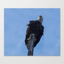 Bald Eagle Photography Print Canvas Print