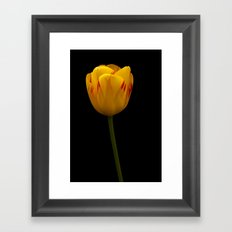 A Flaming Tulip Framed Art Print