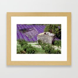 Little farm in the Provence with lavender Framed Art Print