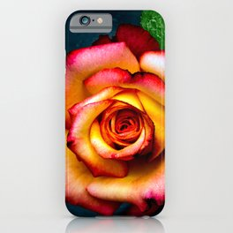 Beautiful Rose iPhone Case