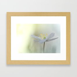Irresistible Wood Anemone.... Framed Art Print