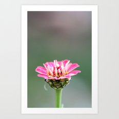 small pink flower Art Print