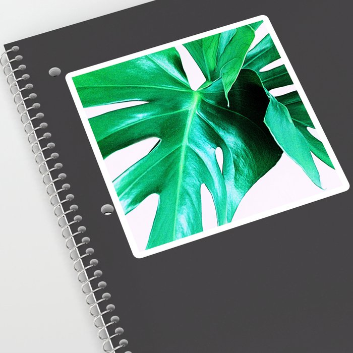 Cheese Plant Leaves Sticker