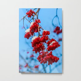 Snowy red berries Metal Print