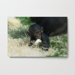 Lola The Bonobo Baby Metal Print