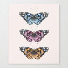 Three Butterflies Canvas Print