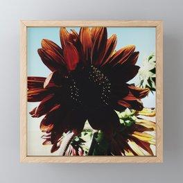 Sunflower Framed Mini Art Print