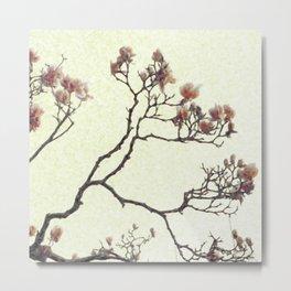 Blooming Dogwood Metal Print