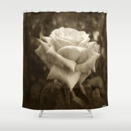 Pink Roses in Anzures 6 Antiqued Shower Curtain