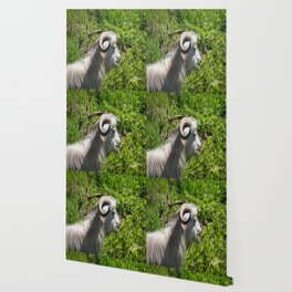 Side View of A Billy Goat Grazing Wallpaper
