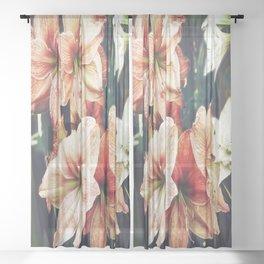 Amaryllis Sheer Curtain