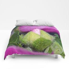 Musk Mallow Bud Comforters