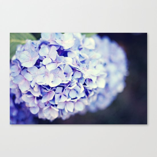 Purple Hydrangeas Canvas Print
