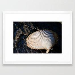 Sun Shell Framed Art Print