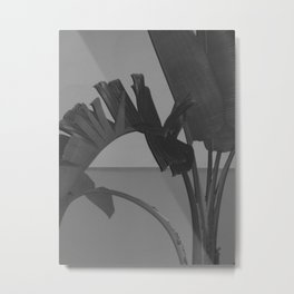 Black and White Palm Metal Print