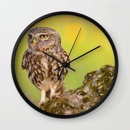 A little owl with a grasshopper. Wall Clock