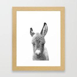 Black and White Baby Donkey Framed Art Print