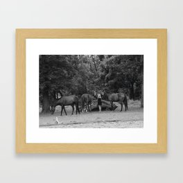 Surrounded Framed Art Print