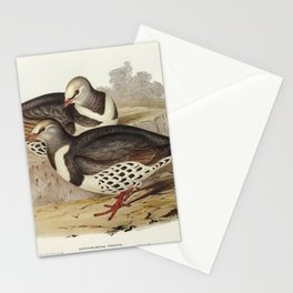 Wonga-wonga Pigeon (Leucosarcia picata) illustrated by Elizabeth Gould (1804–1841) for John Gould's Stationery Cards